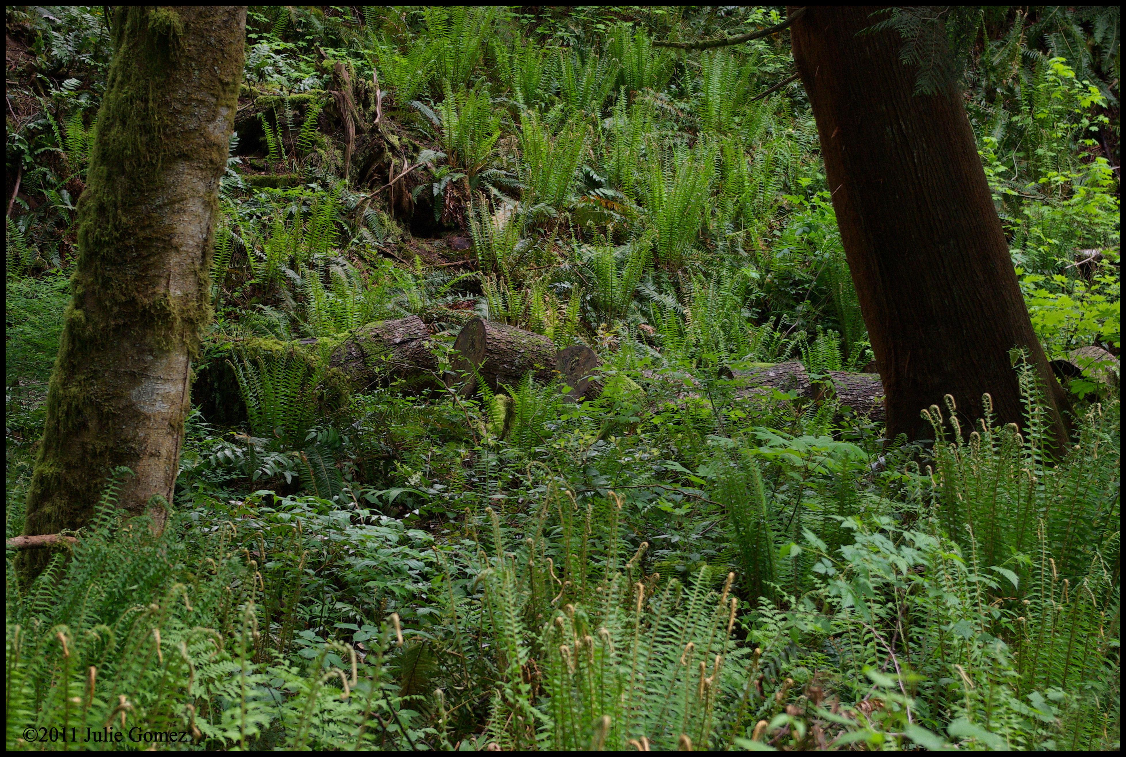 wild garden ten by ten - Wild Garden