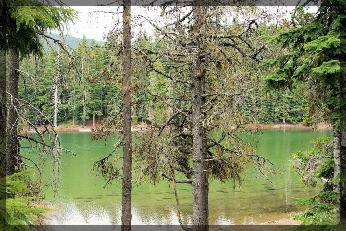 Frog Lake:  Mount Hood National Forest