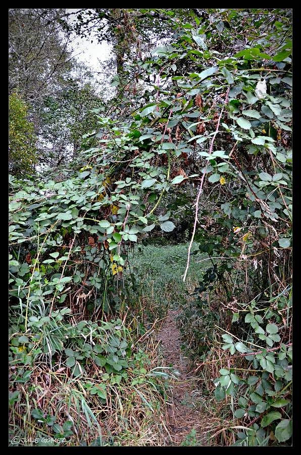 Bramble thickets
