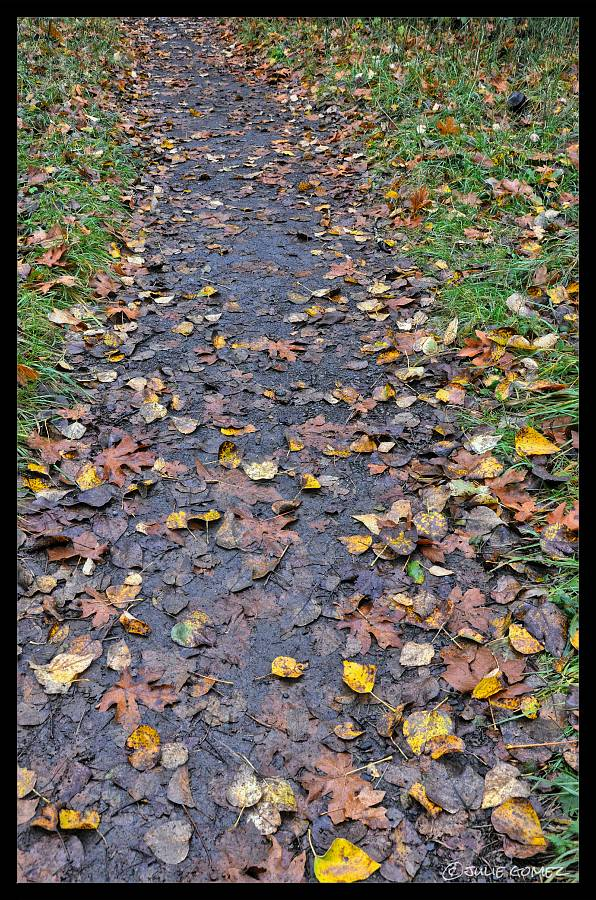The Trail carpeted with cottonwood leaves