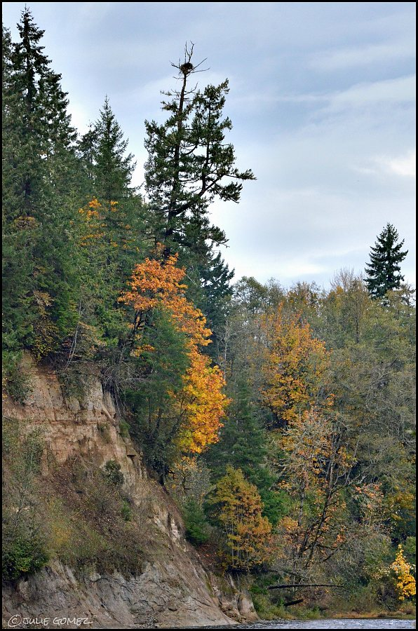 Autumn colors and an osprey nest along the Clackamas River