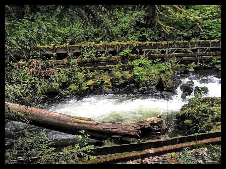 Nature chronicles for The cedar mill