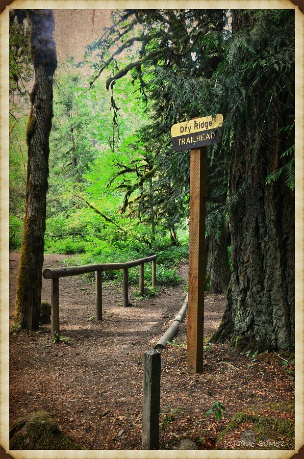 Dry Ridge Trailhead, Roaring River Wilderness