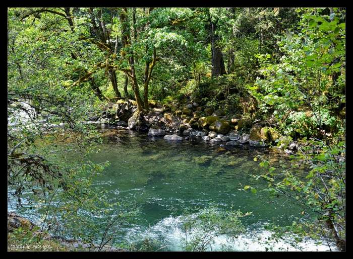 The Pool—Roaring River, Mount Hood National Forest