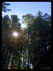 Sunrise and the tree cutter (he's the little green spot to the right of the sun) taking down our leaning red alder